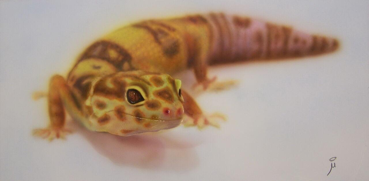 Murielle Paradis 2013_1 Le gecko
