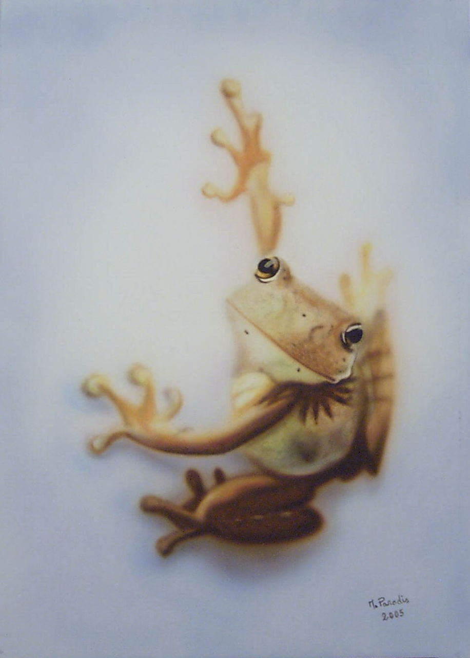 Murielle Paradis La grenouille