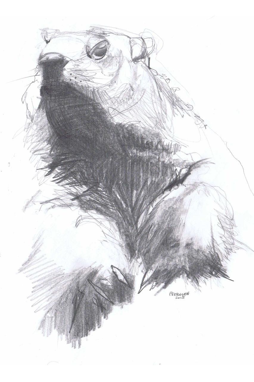 Nicolas Perruche marmotte
