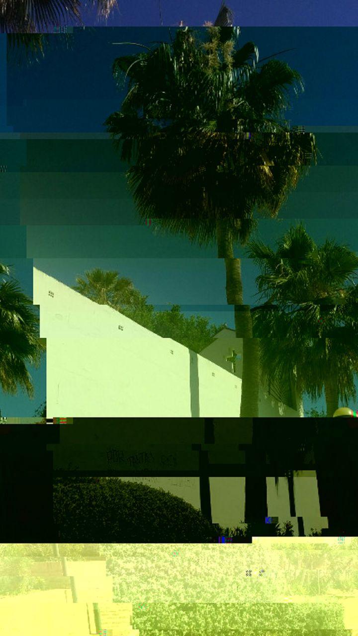 Niklas DC Palm garden