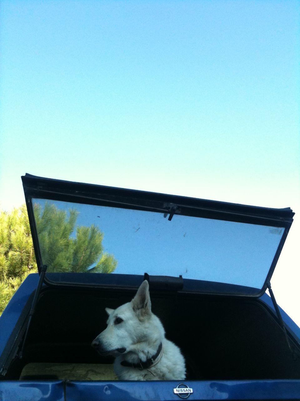 oward Spray HOT DOG