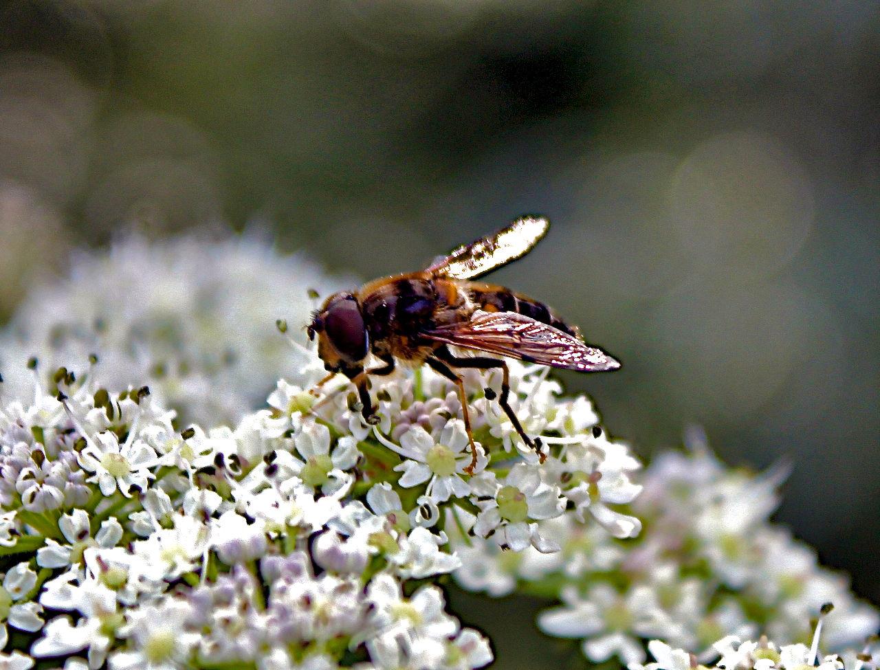 Philippe Wertz Nectar