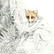 Piros Coltman - Renard chassant