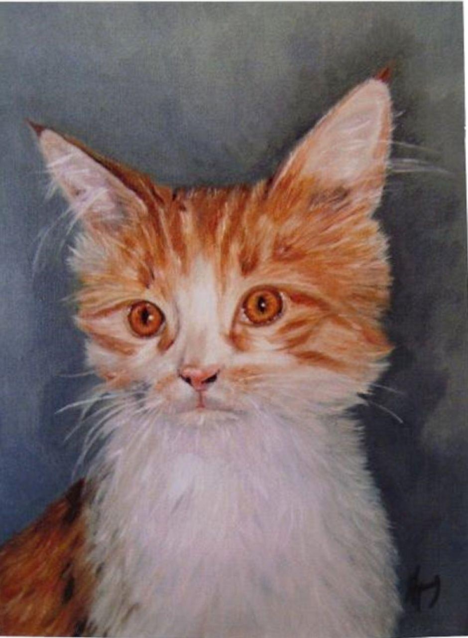 veronique AGUILLON chat de couleur blanc et feu