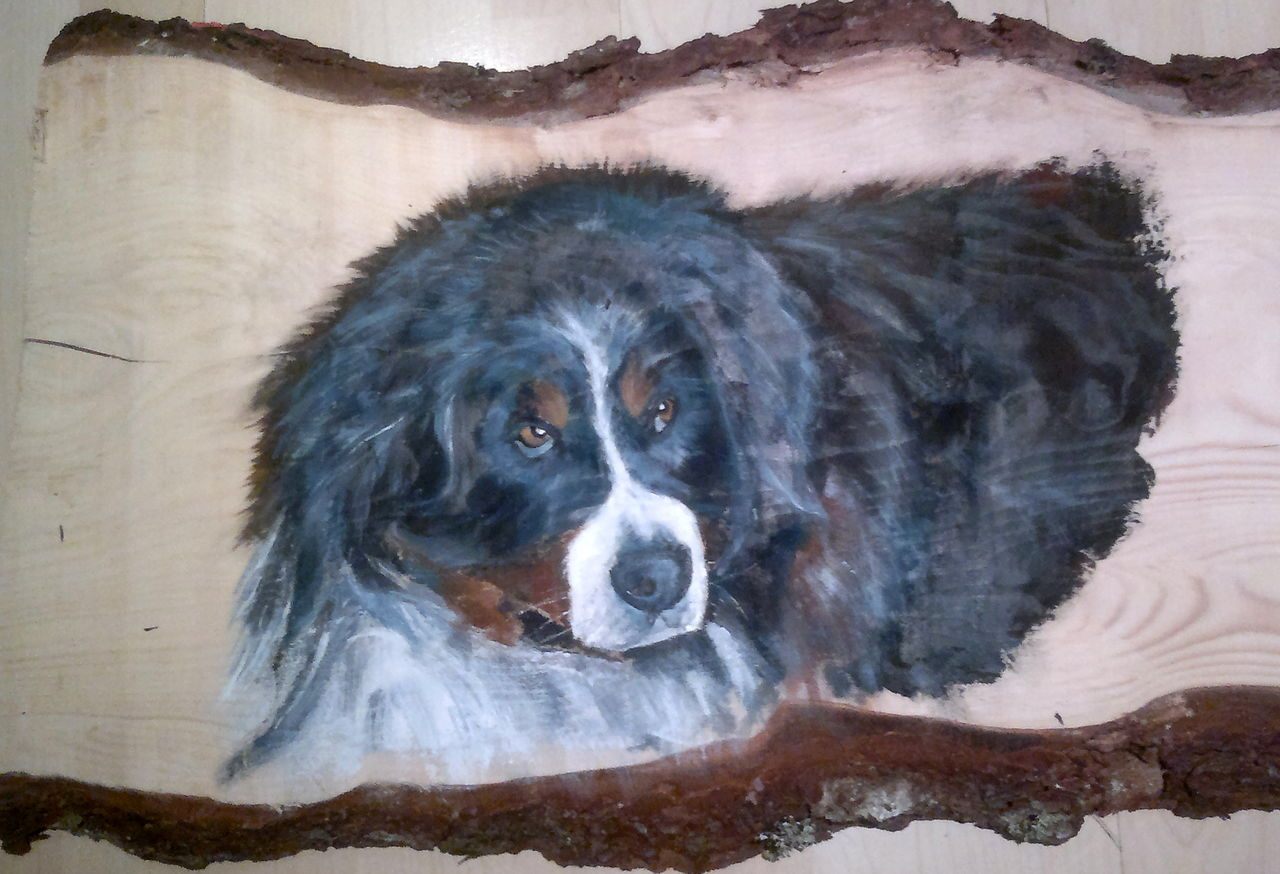 YolandedeComblesdeNayves 62 - chien de  Laurent