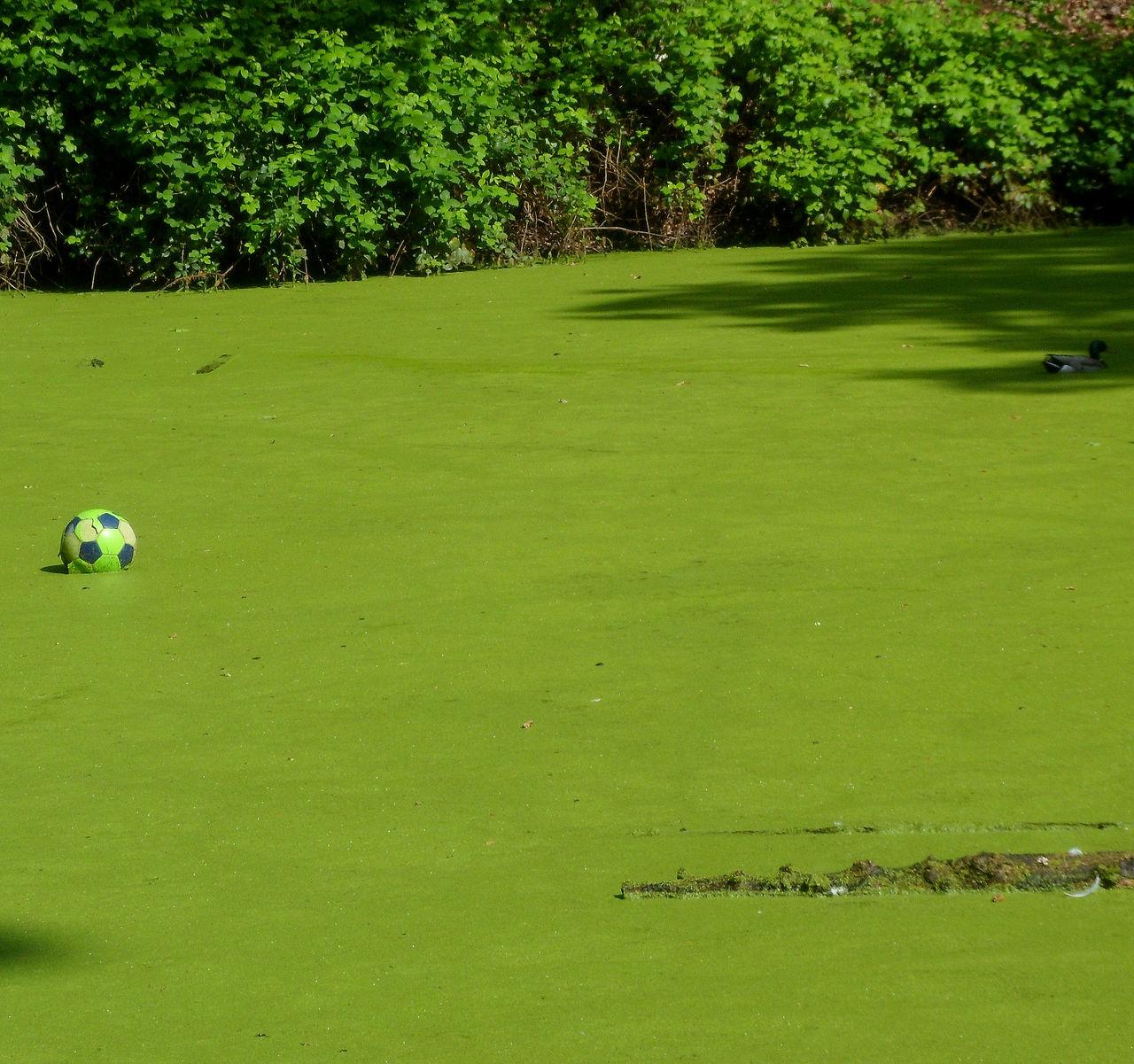 "yves molac entre le ballon et le canard le croco ""semblant"" hésite!!!!"
